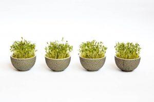 Revitalisez votre alimentation avec les graines germées | Partie 1