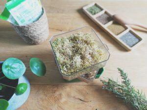 Cultivez vos graines germées :  mes conseils pour les faire soi-même | Partie 2