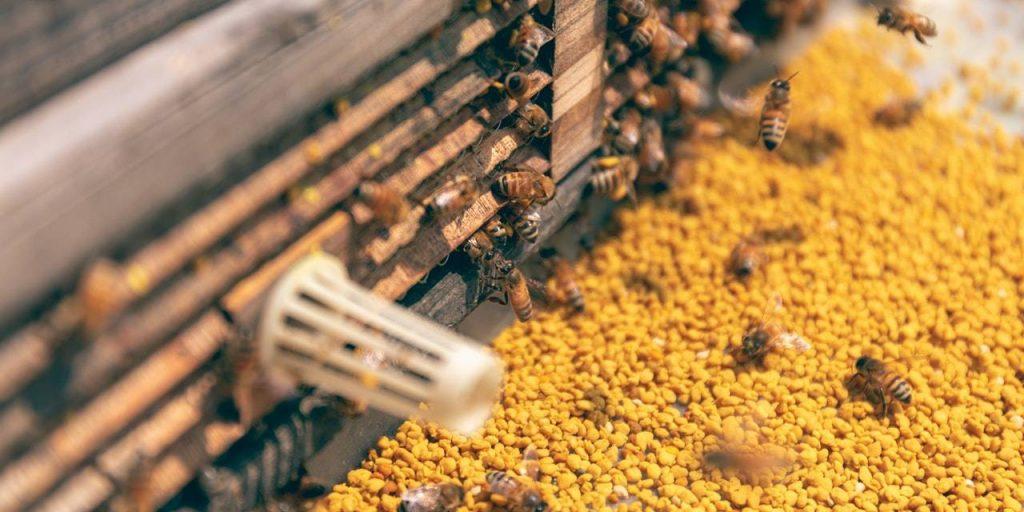 Le pollen est un produit de la ruche recommandé en naturopathie