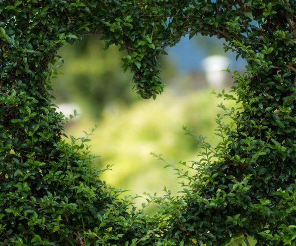 Une naturopathe au coeur de la nature